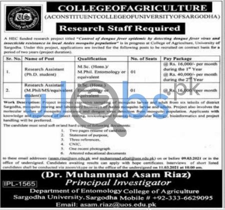 College of Agriculture Sargodha University Jobs 2021 For Research Staff